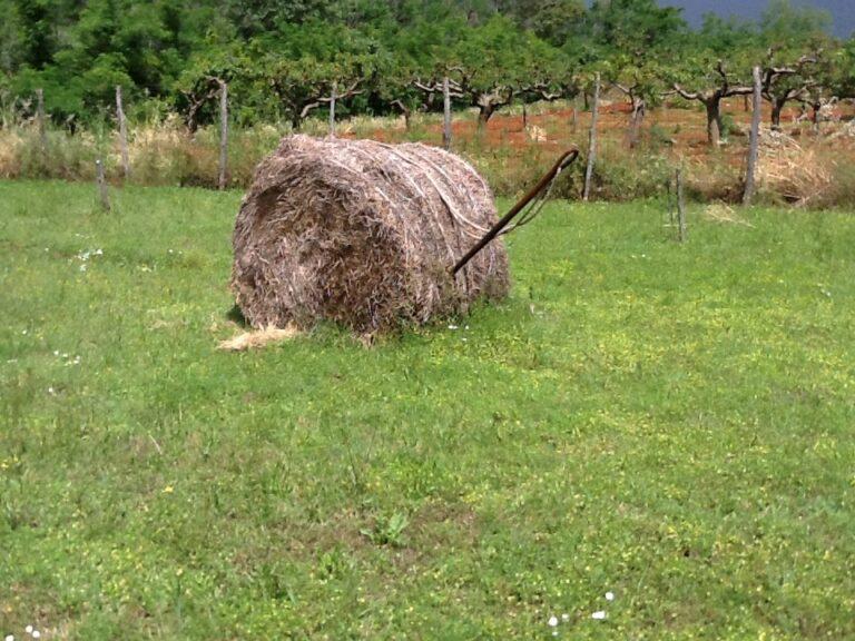Cinque mila euro alla fattoria sociale più virtuosa