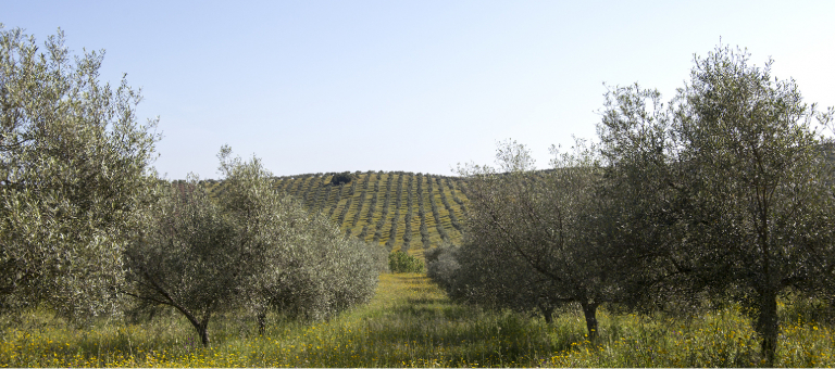 Lisbon hosts scientific meeting on integrated protection of olive crops