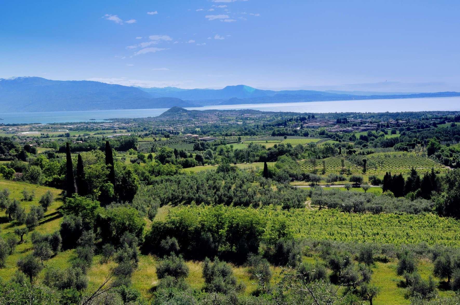 Il buon cibo in prossimità di vigna e oliveto con vista lago. Di Garda