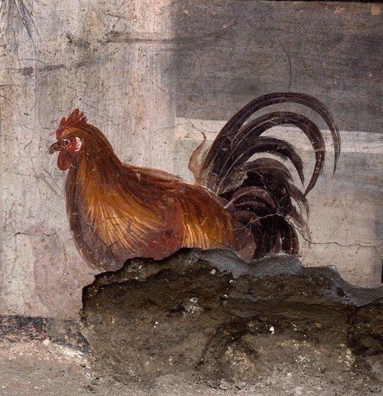 Il canto del gallo