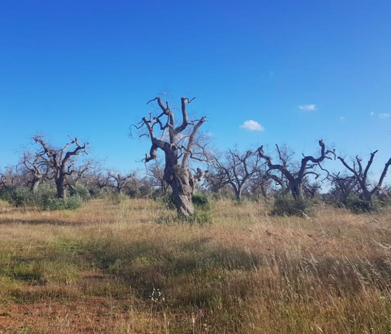 Dieci scatti di natura morta in Puglia