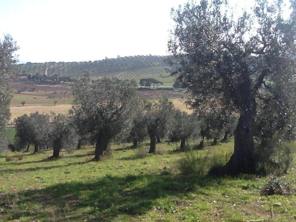 La Toscana punta sul turismo enogastronomico come scelta etica e di identità territoriale
