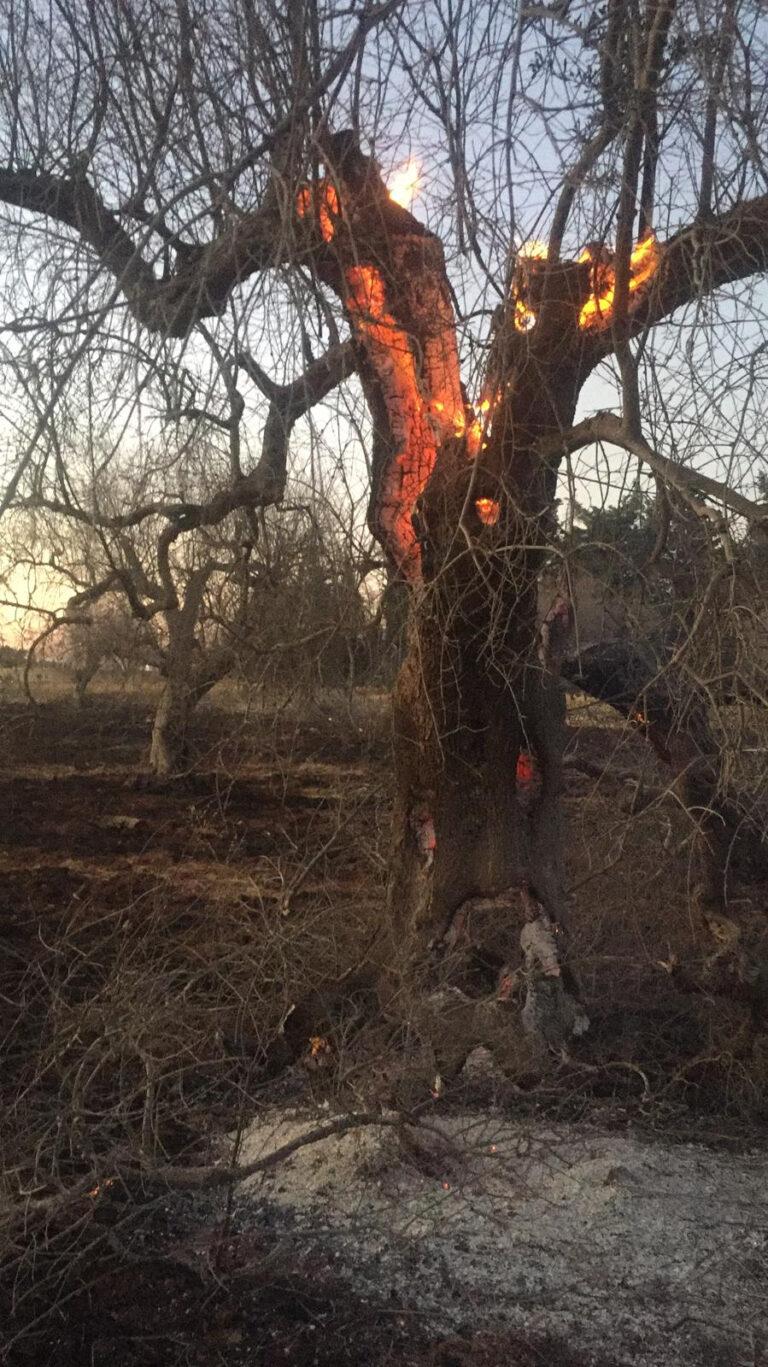 Nel Salento va di moda appiccare incendi nelle campagne