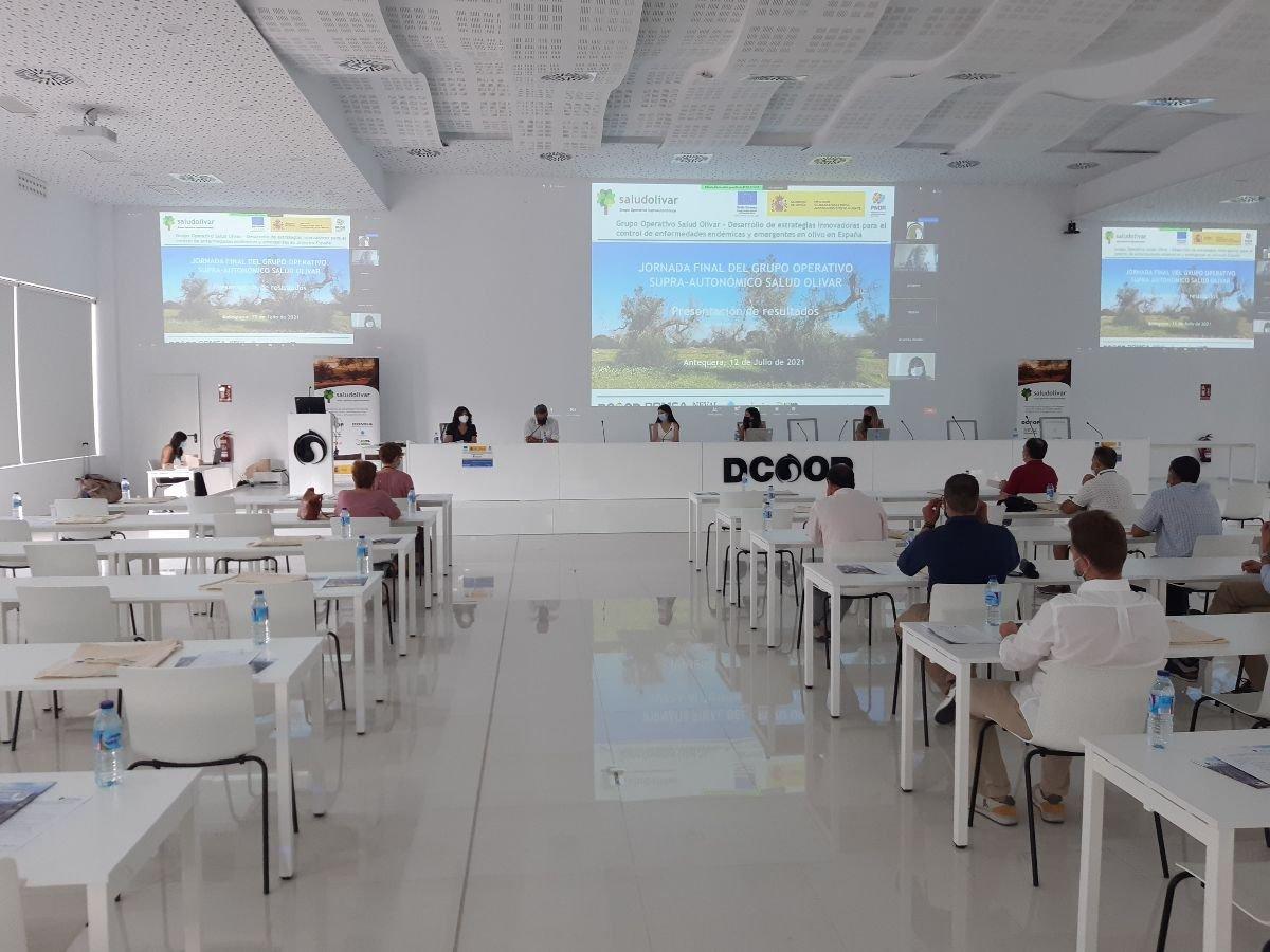 Salud Olivar expone en Dcoop estrategias para controlar enfermedades del olivo