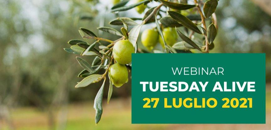 La difesa fitosanitaria dell'olivo, tutto quel che serve sapere
