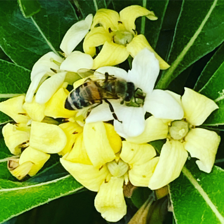 Il 70-80% del cibo che mangiamo dipende dalle api! Bufala o verità?