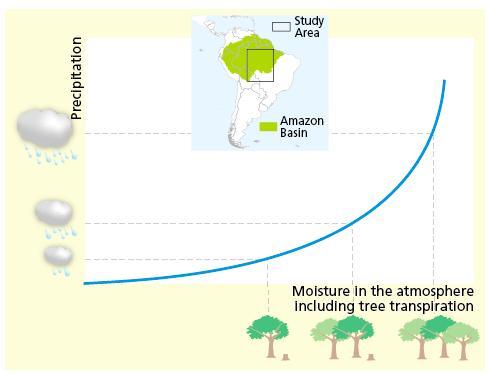 Il ciclo dell'acqua e della piovosità viene influenzato dalla deforestazione
