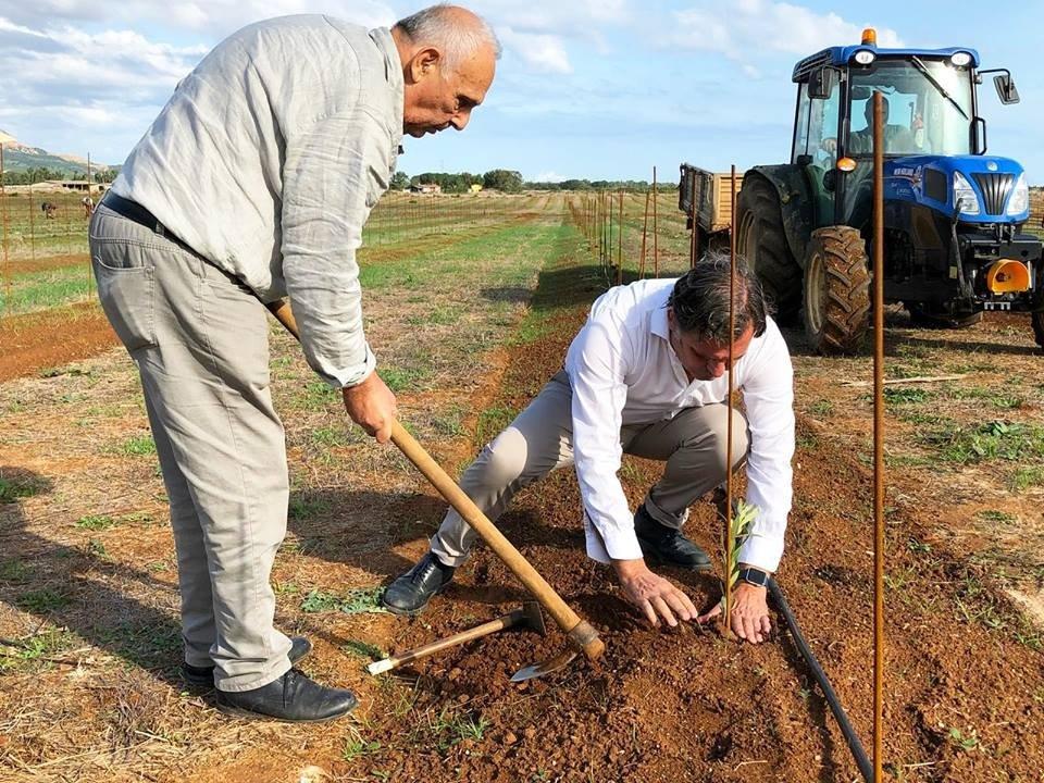 Piantare nuovi olivi