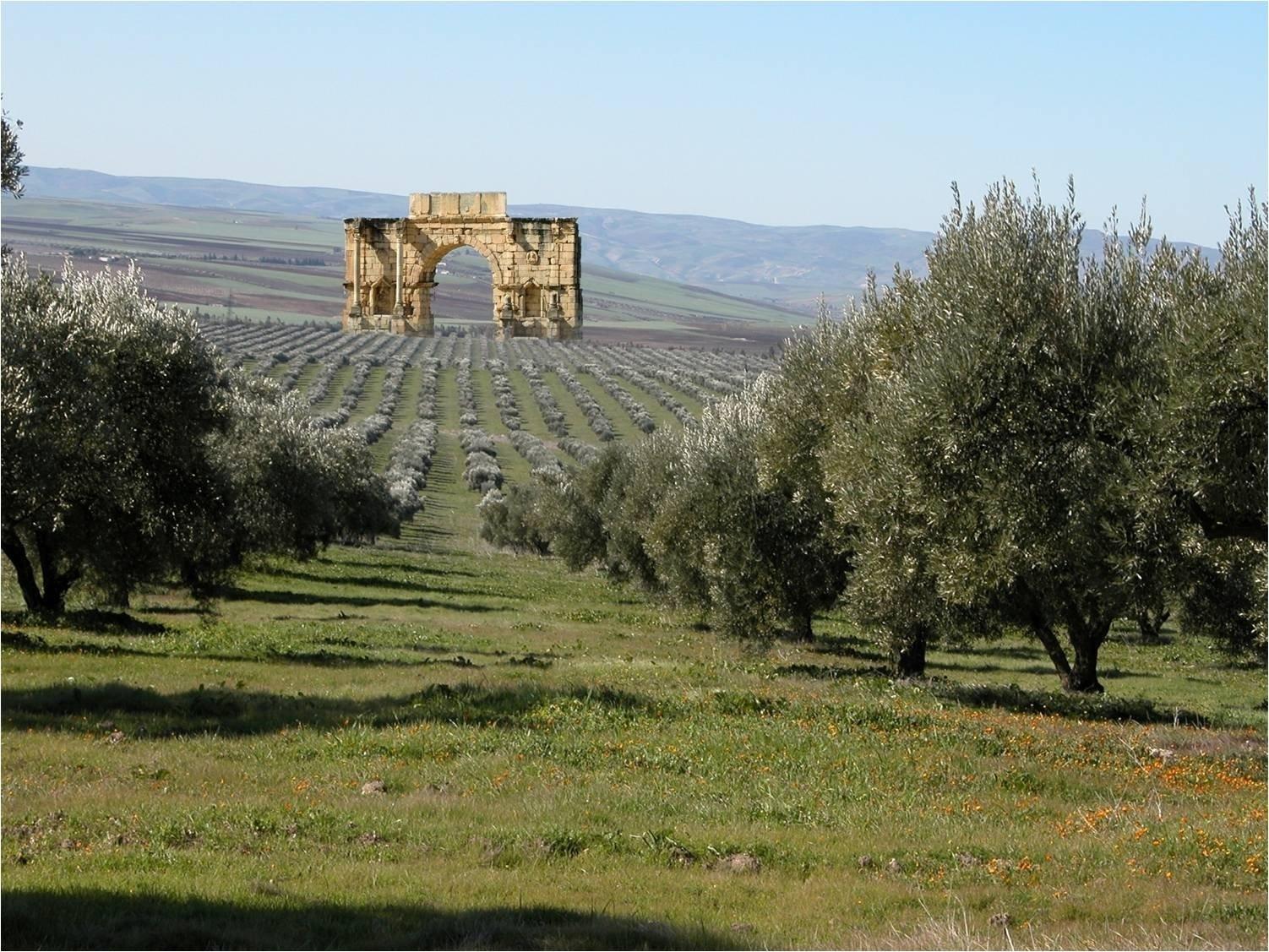 L'olivagione in Marocco