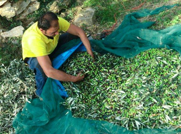 Contratti di fornitura olive