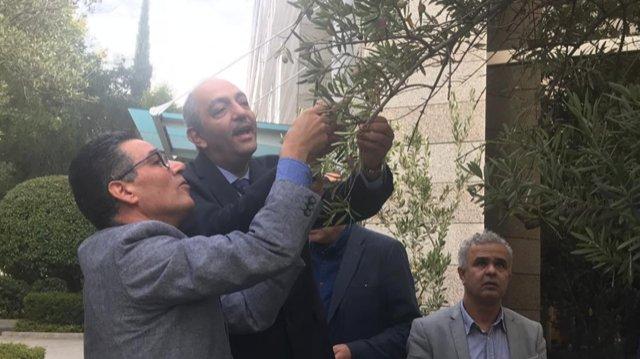 A Madrid, presso il Consiglio oleicolo internazionale, un raccolto di olive mondiale