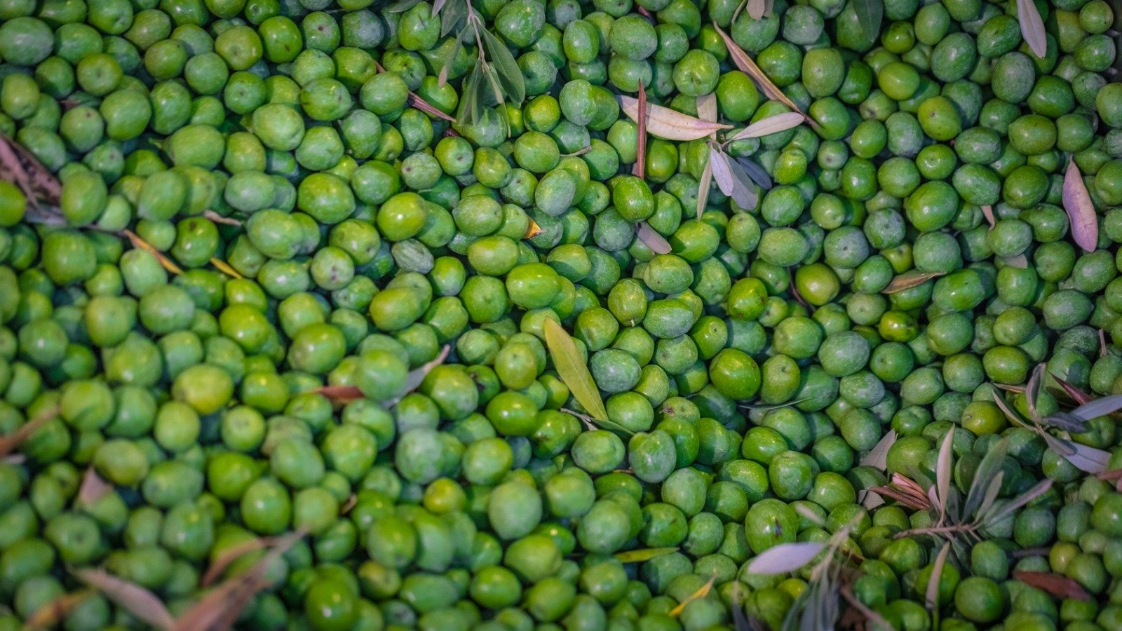 Cosa succede alle olive