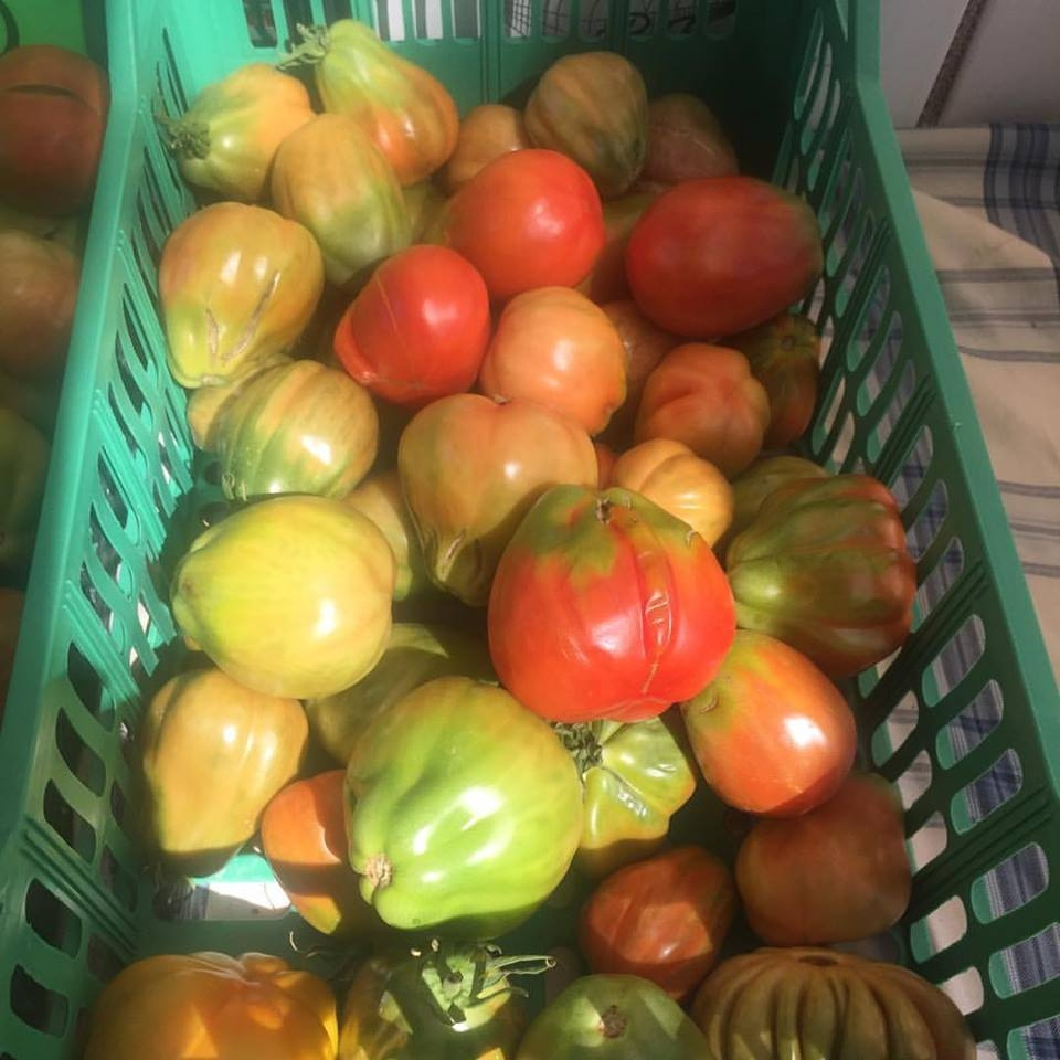Pomodori sostenibili