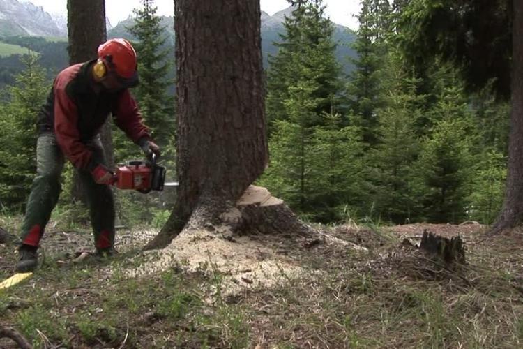 La valorizzazione delle foreste in Toscana