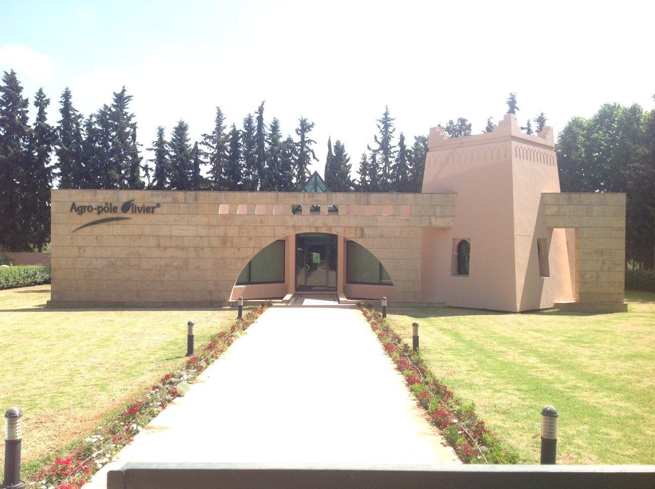Marocco oleario in gran forma