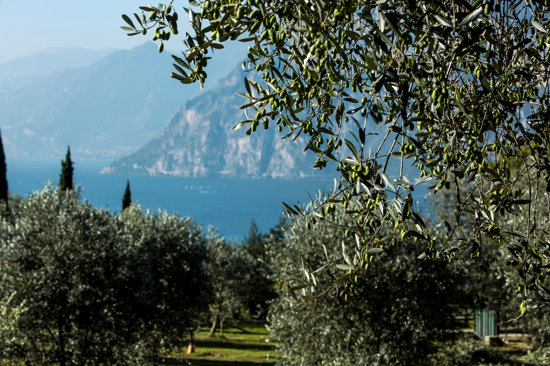 Dop Garda, olivagione 2017