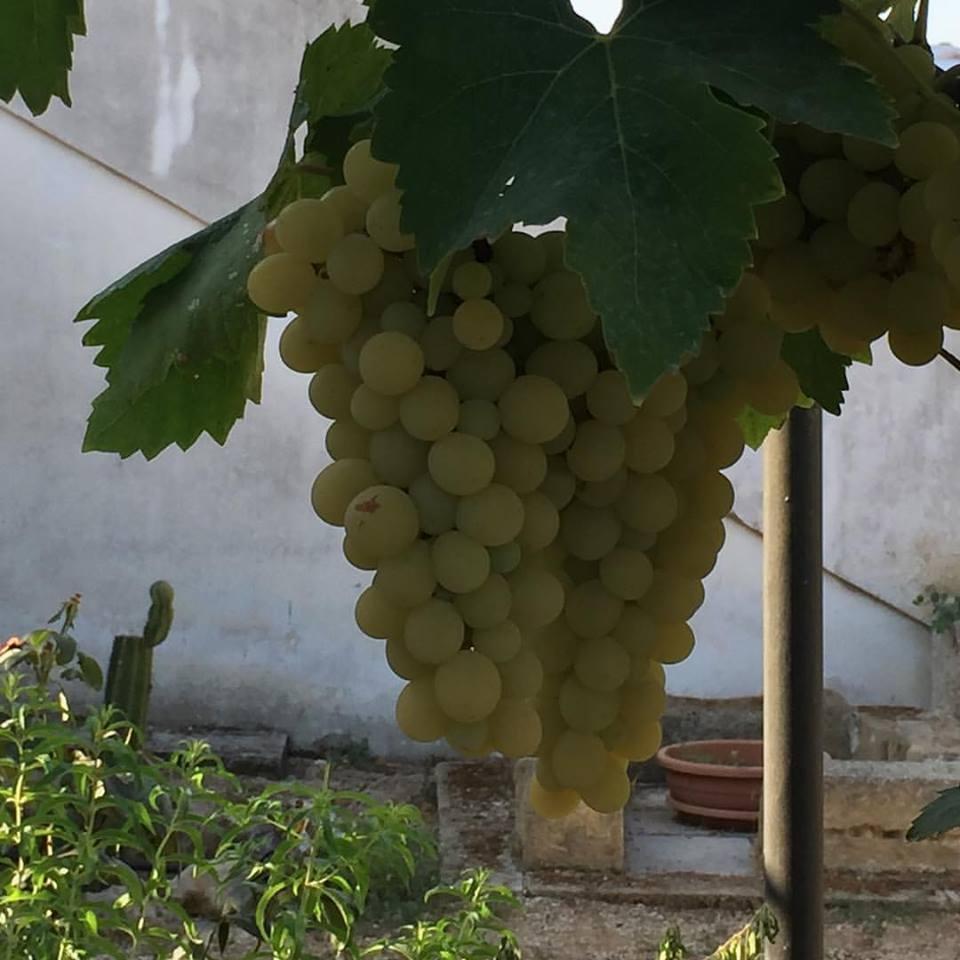 Appuntamento con l'ottavo Simposio internazionale dell'uva da tavola