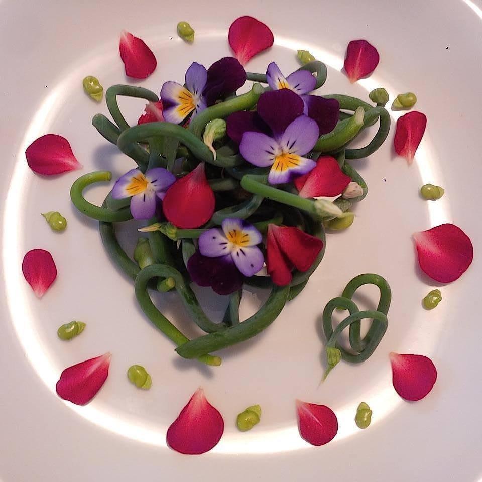 Puntarelle di cipolla egiziana ligure in insalata, con favette fresche e viole del pensiero
