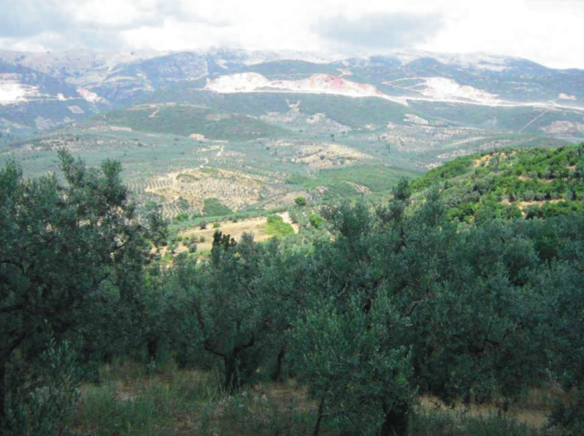 L'olivicoltura in Turchia