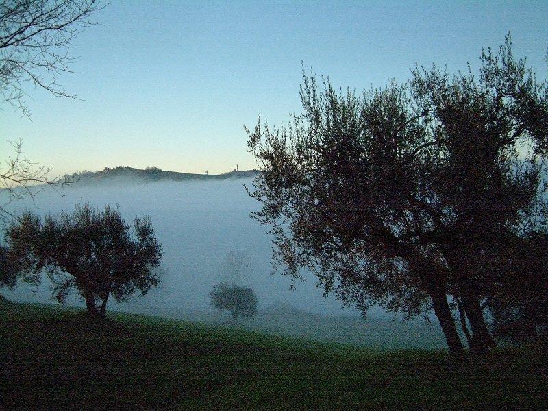 Viaggio tra gli olivi