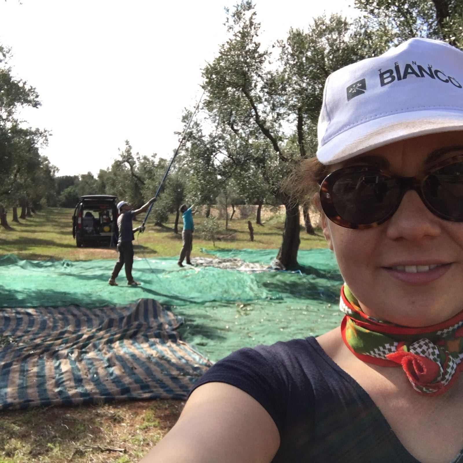 Le olive raccolte in Salento