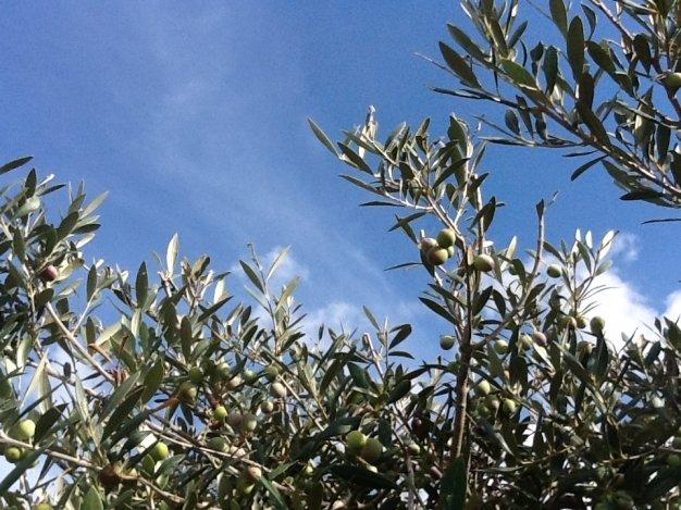 Dall'oliva al girasole. Assitol a OOF 2020
