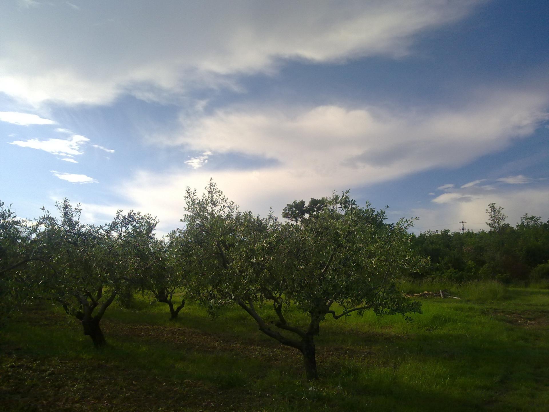 Difesa integrata dell'olivo