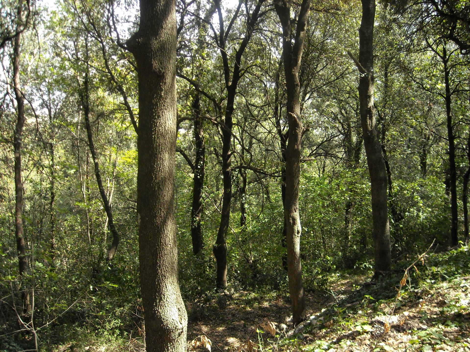 Foreste nazionali