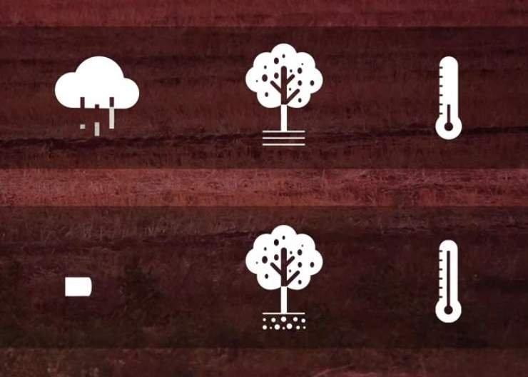 Irrigaolivo, un progetto per la gestione dell'irrigazione razionale nella coltivazione degli olivi