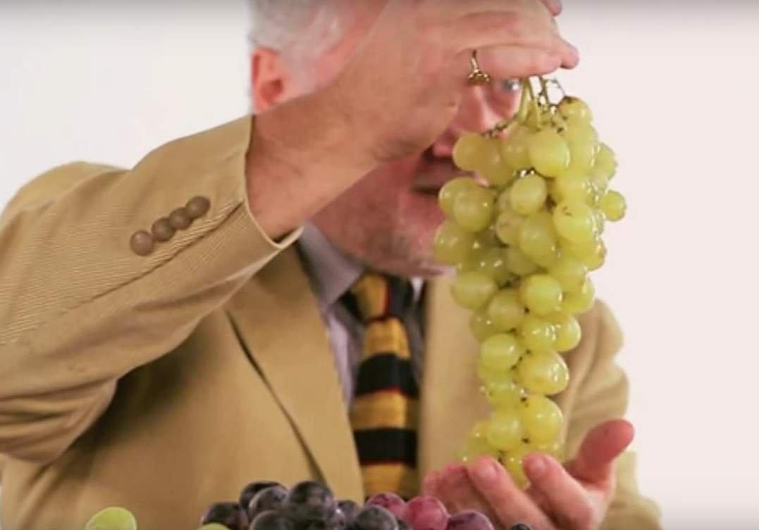La lunga stagione dell'uva