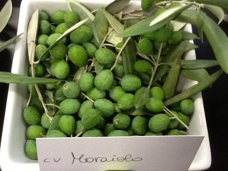 L'oliveto? E' un pozzo di carbonio