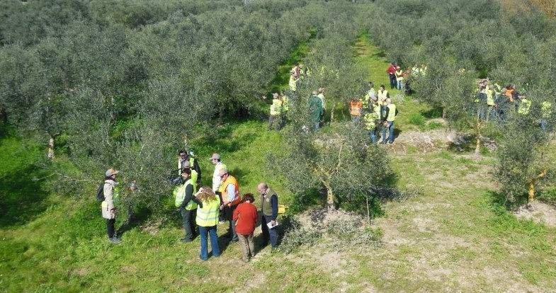L'olio Igp Puglia in tour