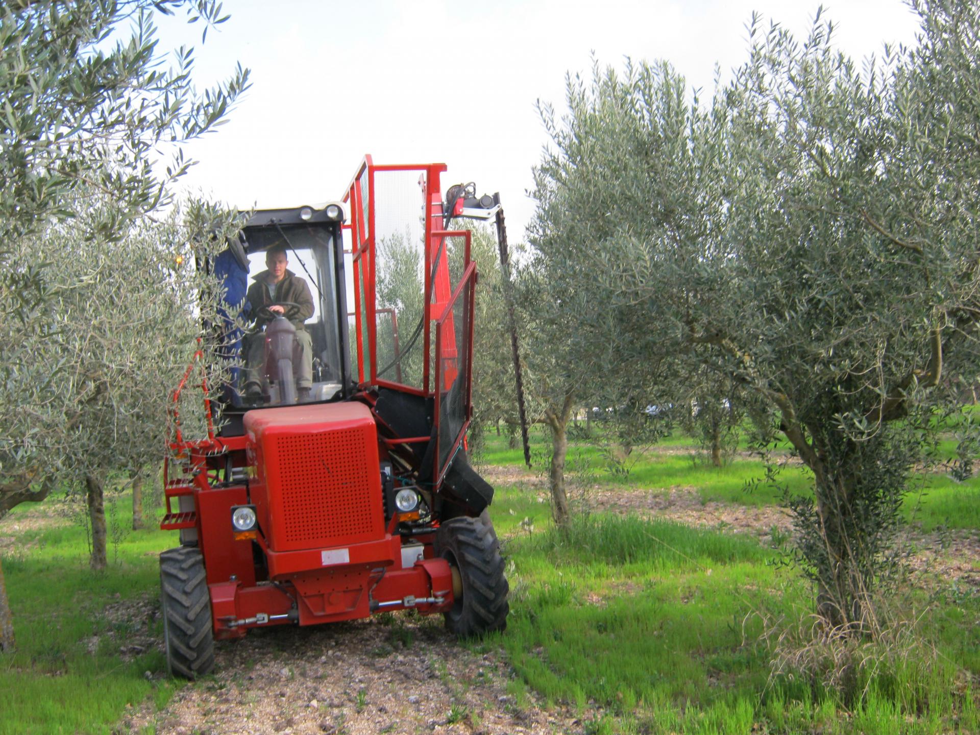 La macchina multiuso per gli olivi