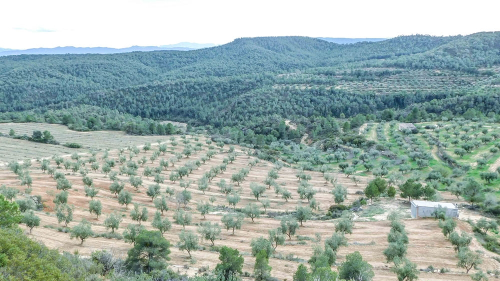 Aceite Les Garrigues