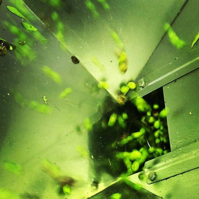 Per Confagricoltura bisogna dichiarare lo stato di crisi del settore dell'olio d'oliva