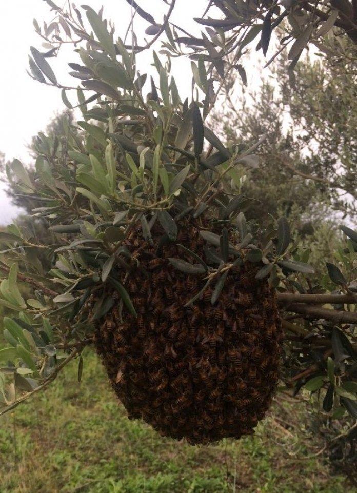 Clima, Cia: la moria delle api mette a rischio il 70% produzione agricola mondiale