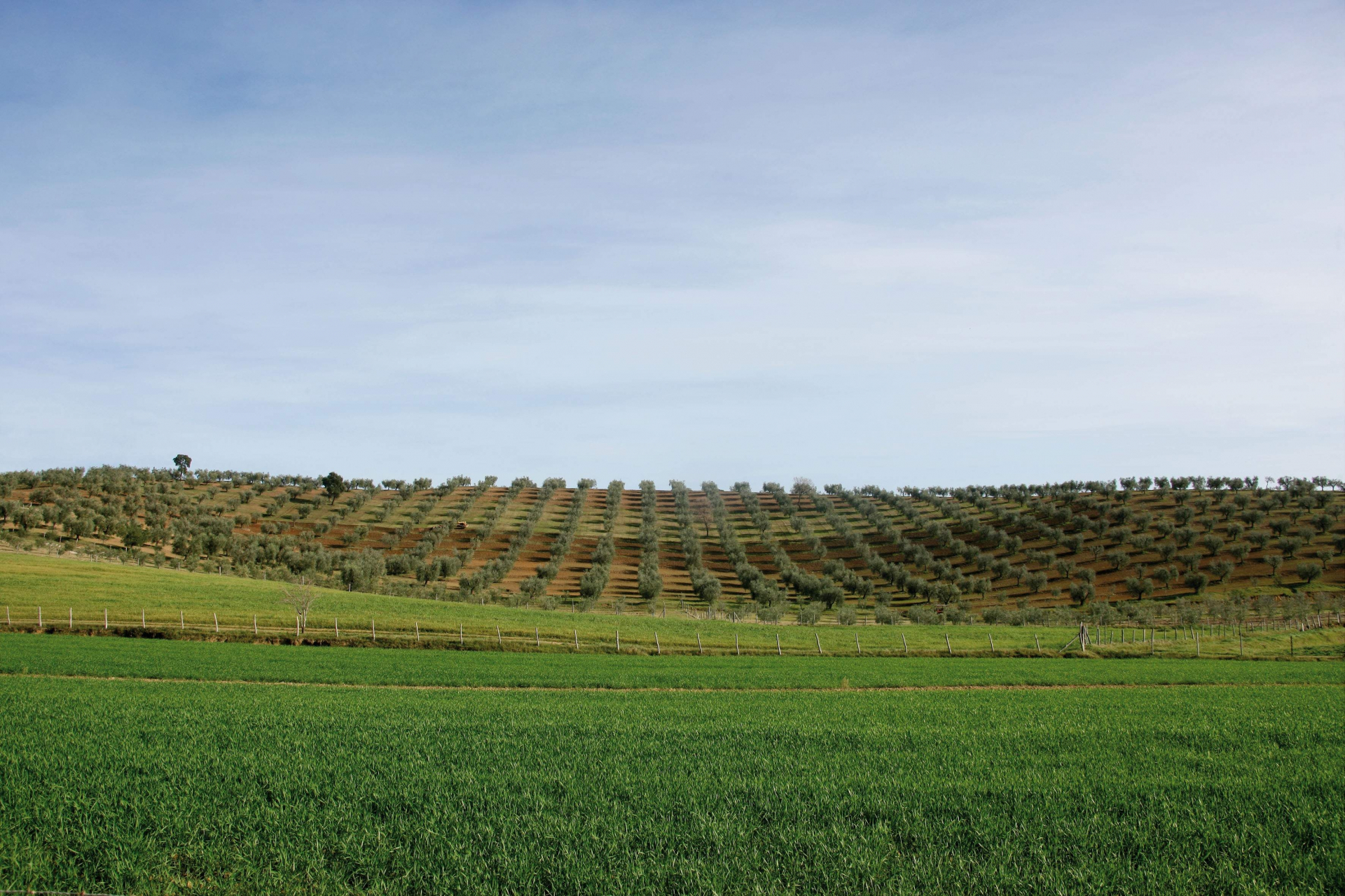 La grande Toscana degli oli