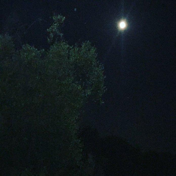 Coltivare con la luna