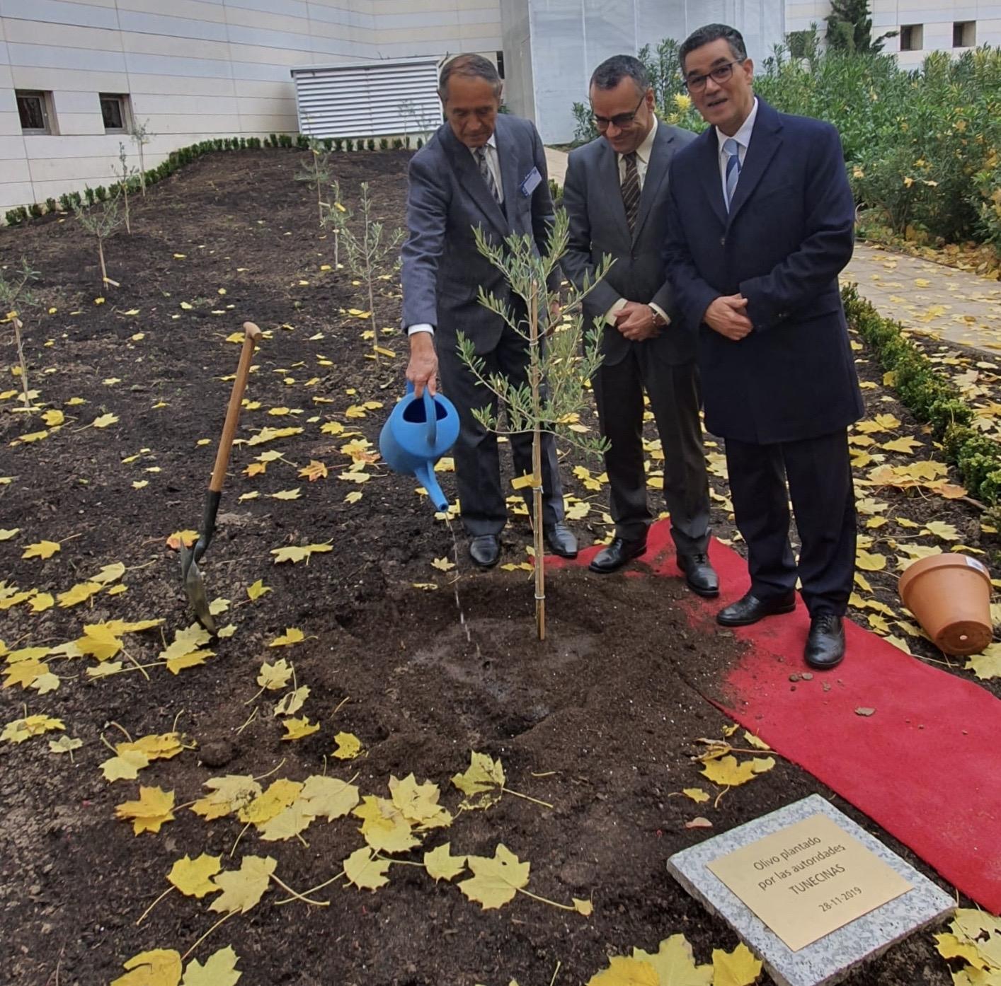 Madrid,  il direttore esecutivo del Consiglio oleicolo internazionale Abdellatif Ghedira ha inaugurato il giardino di ulivi del Coi