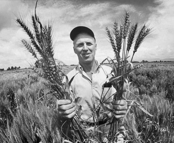Norman Borlaug e Nazareno Strampelli, due rivoluzionari verdi