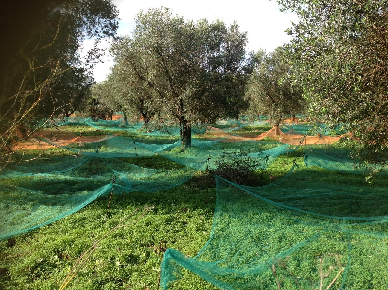 La bellezza delle reti sotto gli olivi