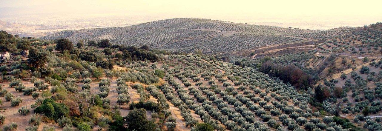Aceite Montes de Granada
