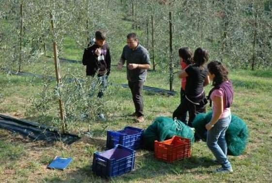Olivi di Piemonte e Valle d'Aosta