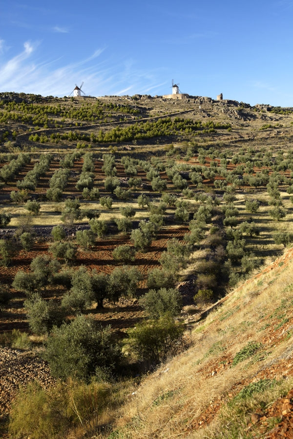 Aceite Montes de Toledo
