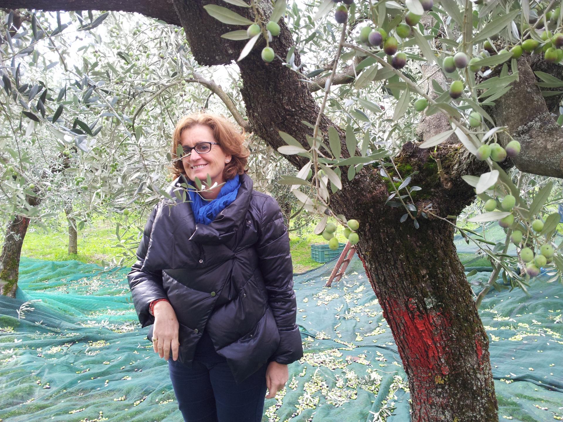 Un atto di coraggio per l'olivicoltura