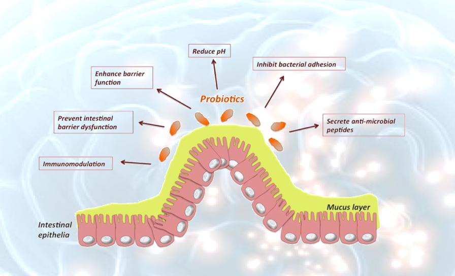 Perché i batteri non vogliono gli acidi grassi polinsaturi