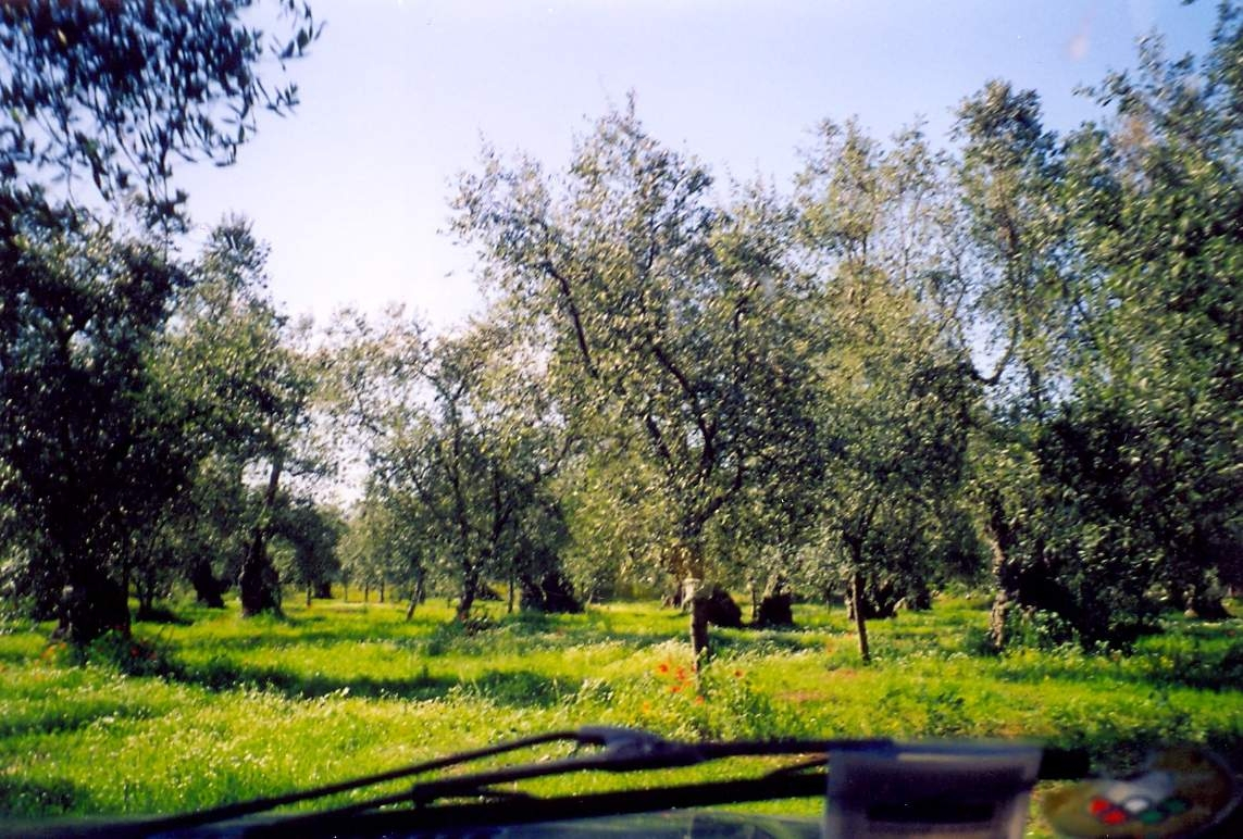 Il fabbisogno di innovazione nel settore olivicolo