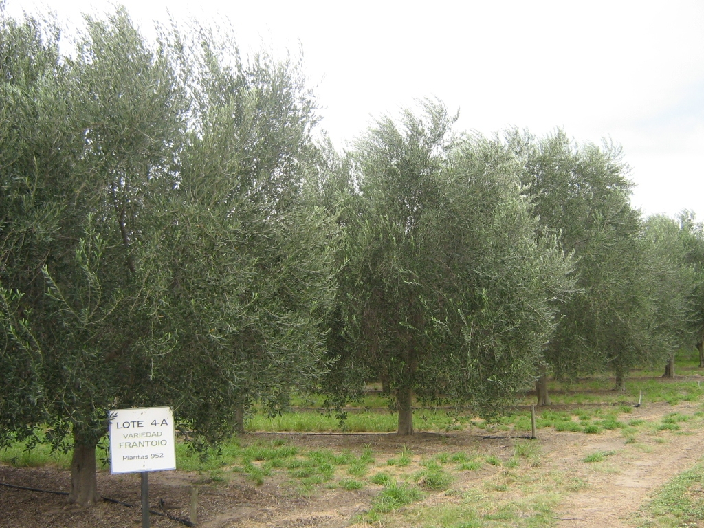 Buenos Aires, international seminar on the olive sector in the Americas