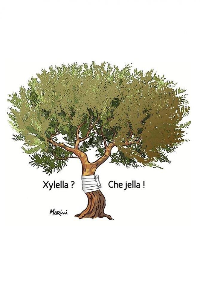 Xylella, tanto folclore