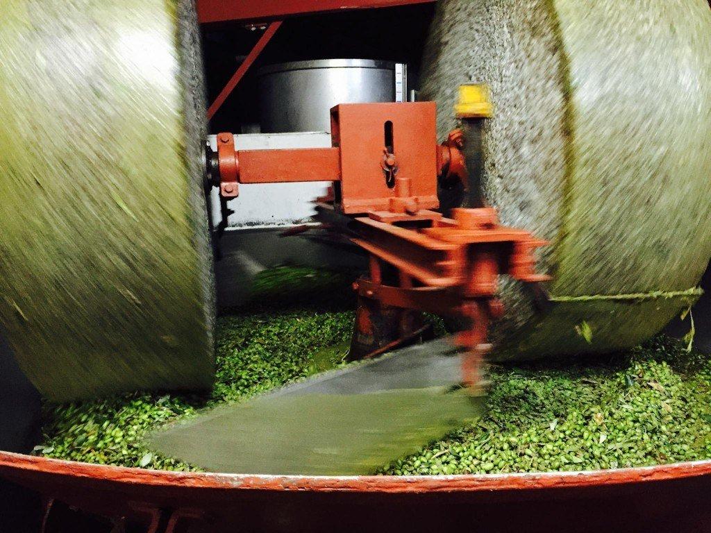 Olive francescane